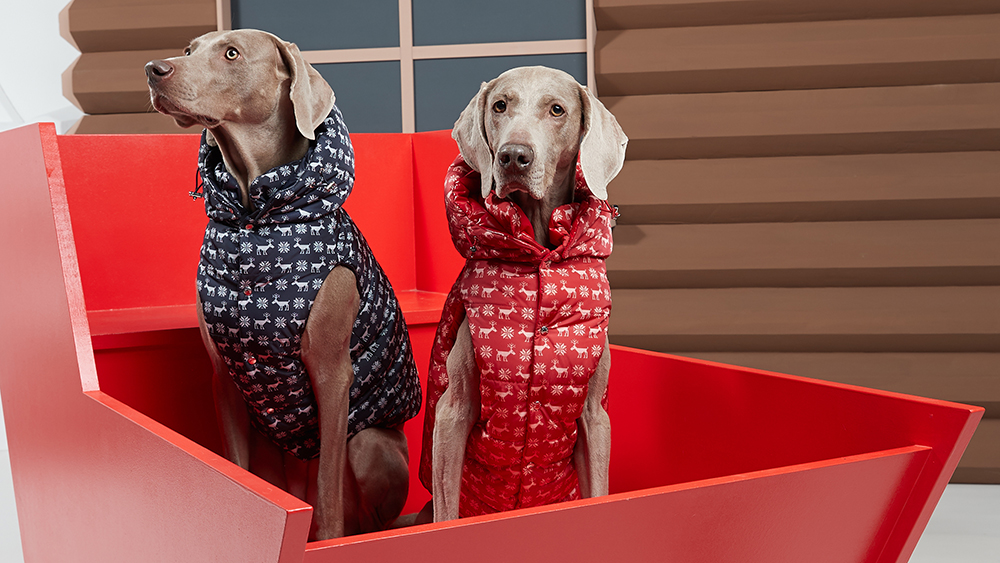 Moncler's new dog jackets are part of a collaboration with Poldo.