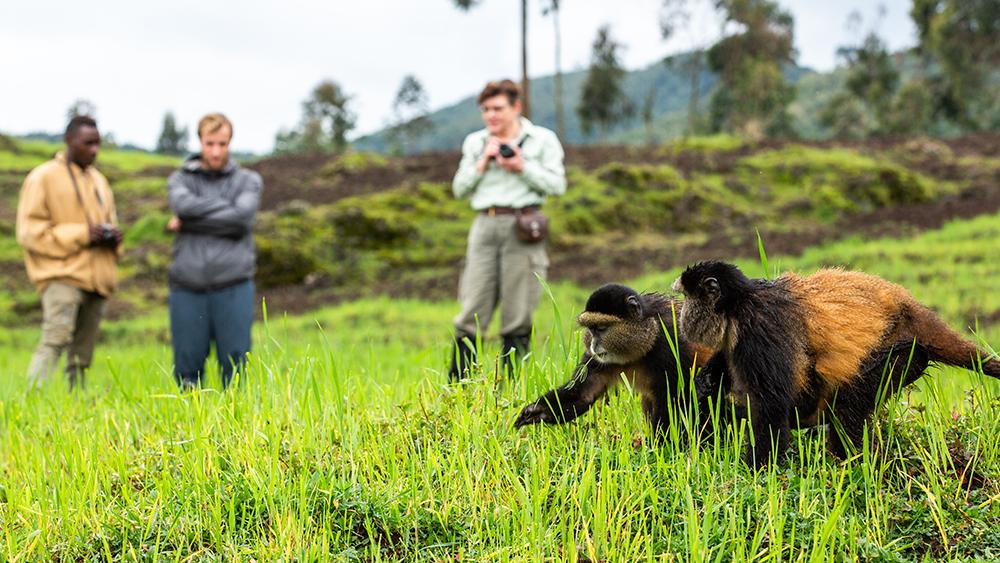 A trek to see Rwanda's golden monkeys