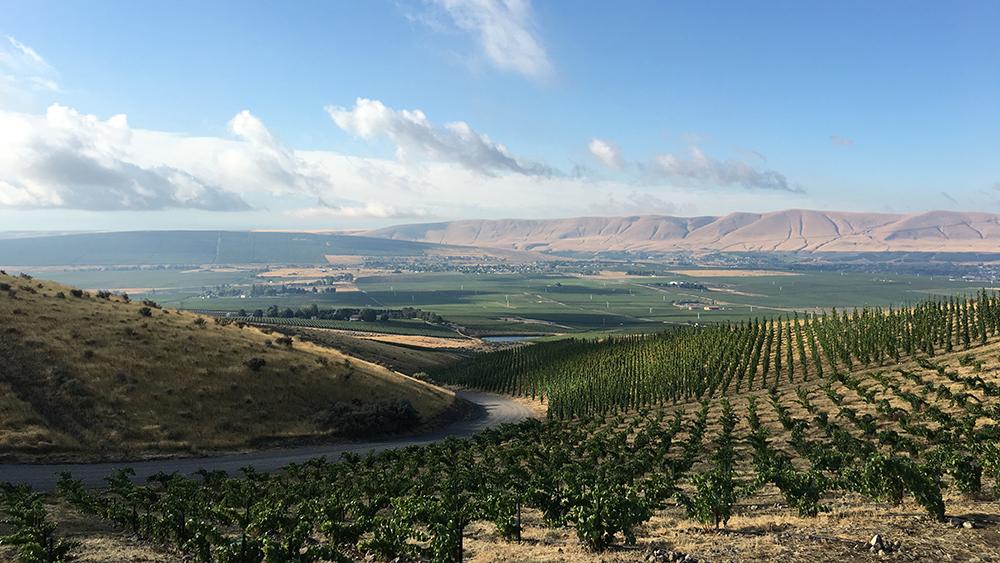 WeatherEye Vineyard overlooking the Red Mountain in Washington