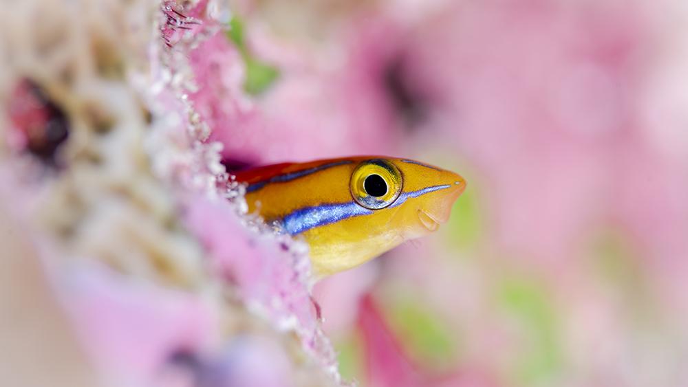 COMO Maalifushi Underwater Photography Experience