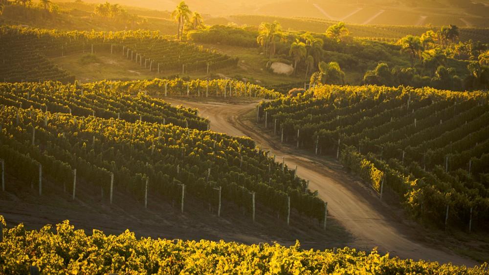 Bodega Garzon Uruguay wine