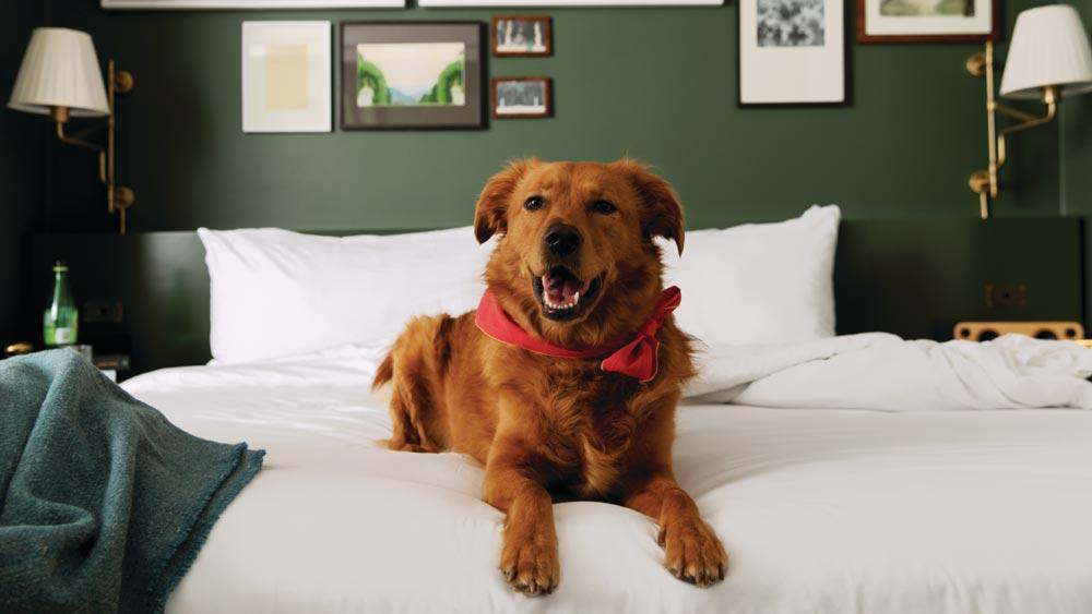 MGM pet-friendly