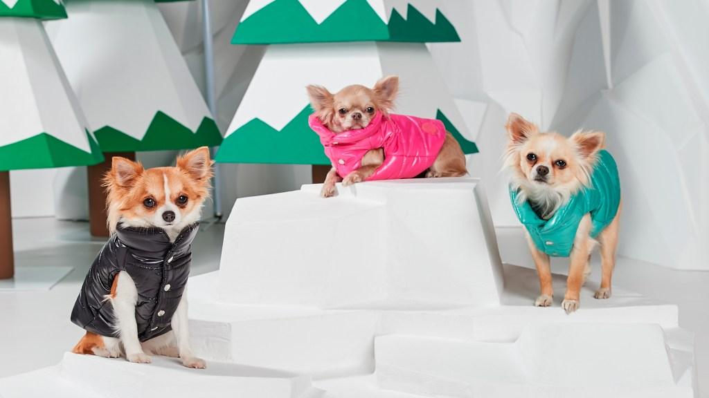 Moncler Dog Puffer Coat