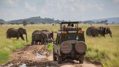 Elephant watching SkySafari Elewana