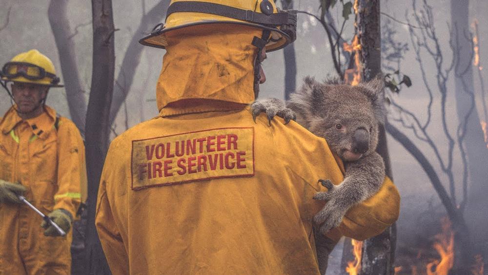 Australian Volunteer and Koala