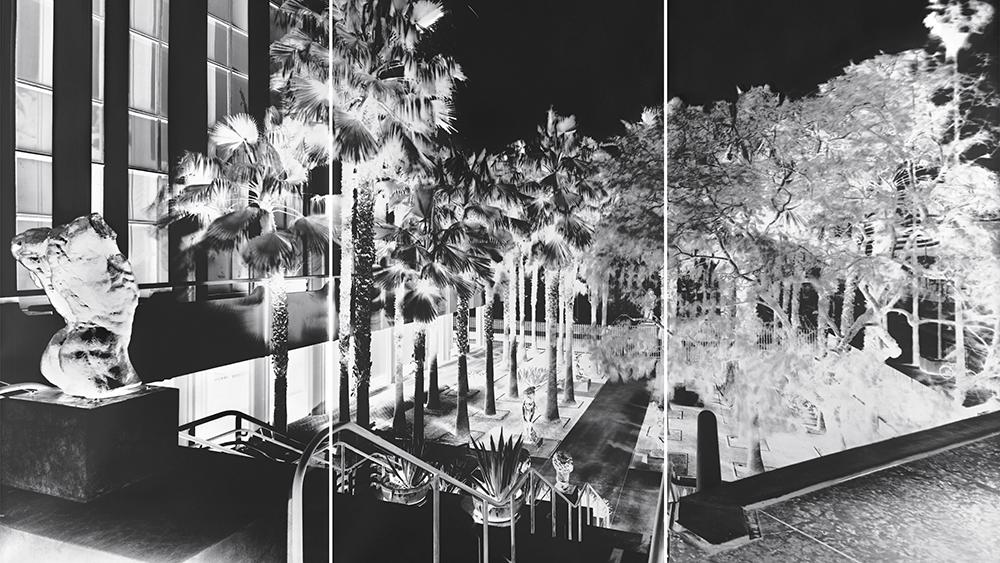 Vera Lutter's Rodin Garden, I: February 22, 2017
