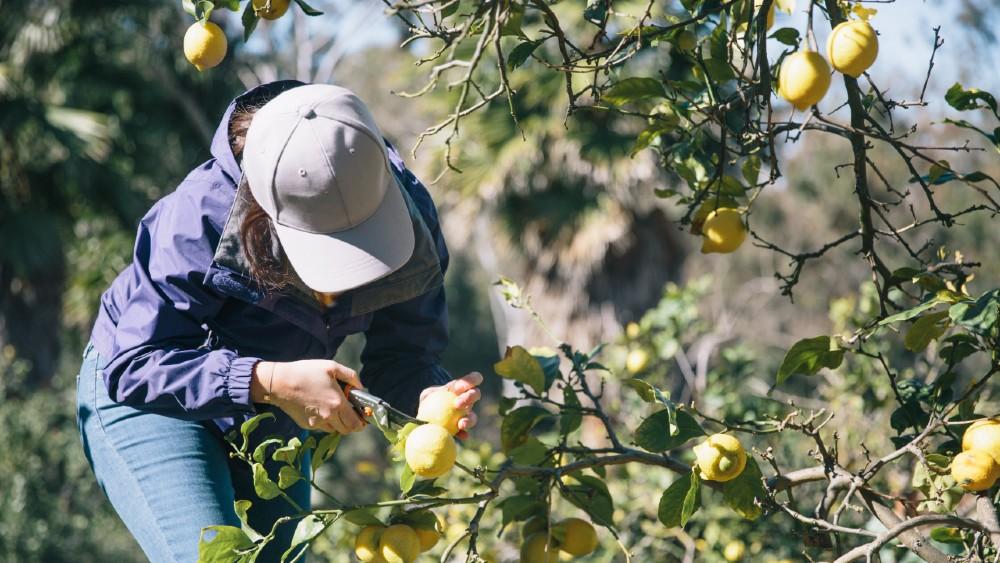 Rancho Valencia Resort & Spa citrus grove