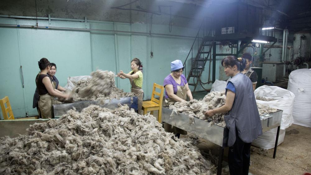 cashmere production