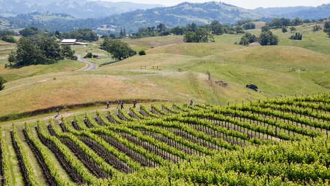 wine country reopens sonoma jordan winery