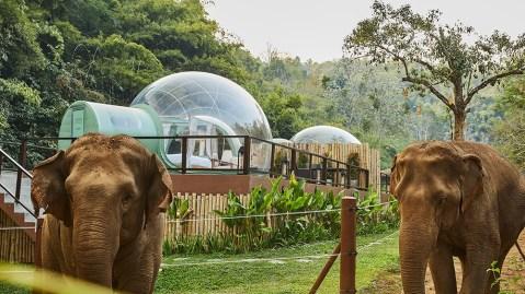 Jungle Bubble at Anantara Golden Triangle Elephant Camp & Resort