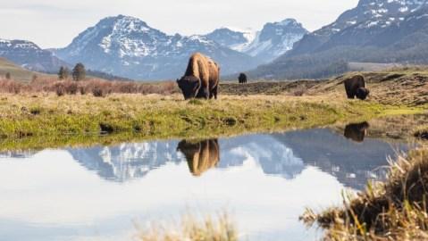 Wyoming Yellowstone national park