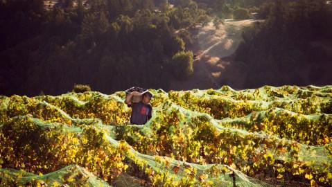 sonoma vineyard winemaker ehren jordan