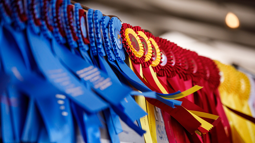 Horse Show Ribbons Flying in the Wind