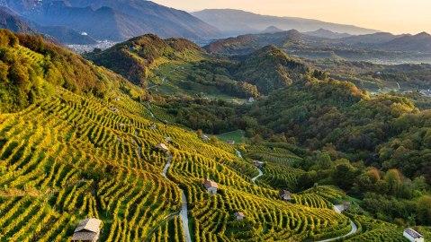Conegliano Valdobbiadene vineyard