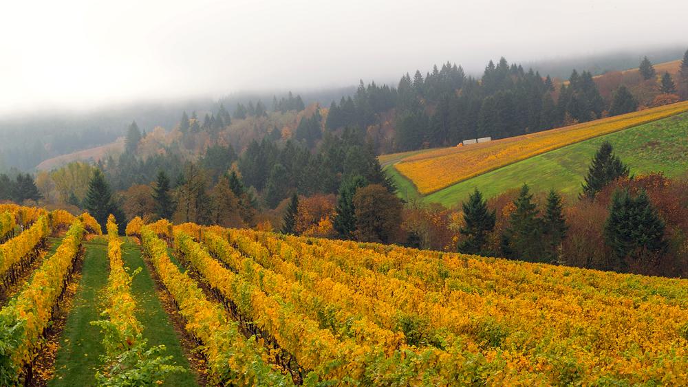 oregon willamette valley vineyard