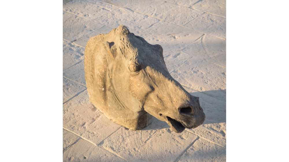 Fabio Salini horse head