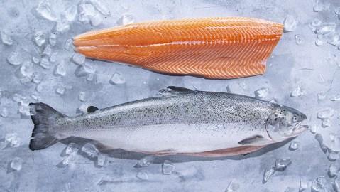 Kvarøy Arctic Salmon