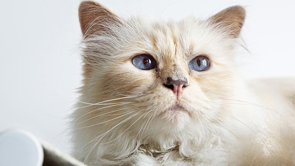 LucyBalu x Choupette Swing Cat Hammock