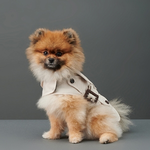 Pet Gift Guide 2020-The Barkers Trench Coat