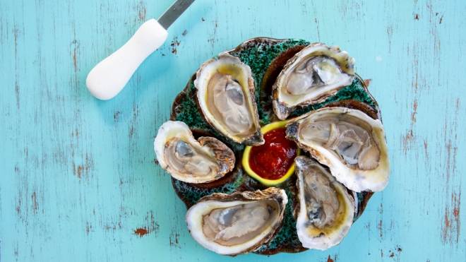 shucked florida farmed oysters