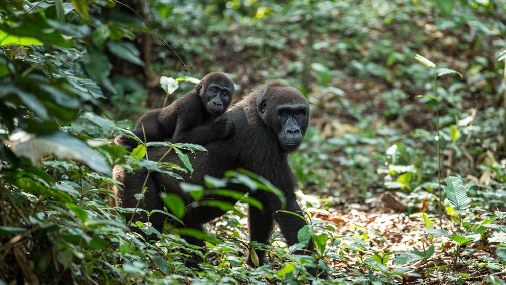 A private safari in the Congo by Mavros Safaris