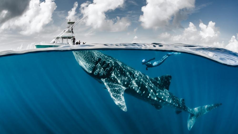 Ocean Safari In Three Oceans