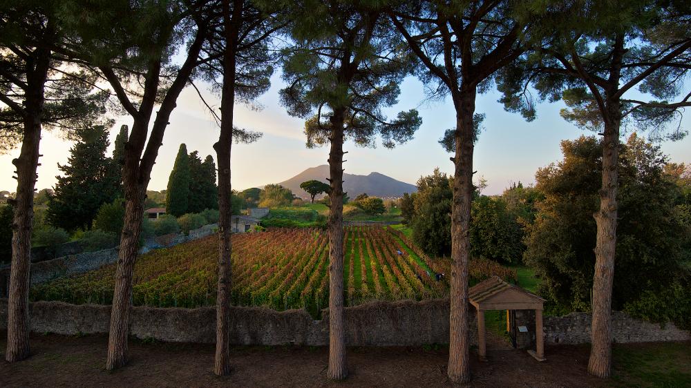 Mastroberardino Villa dei Misteri vineyard