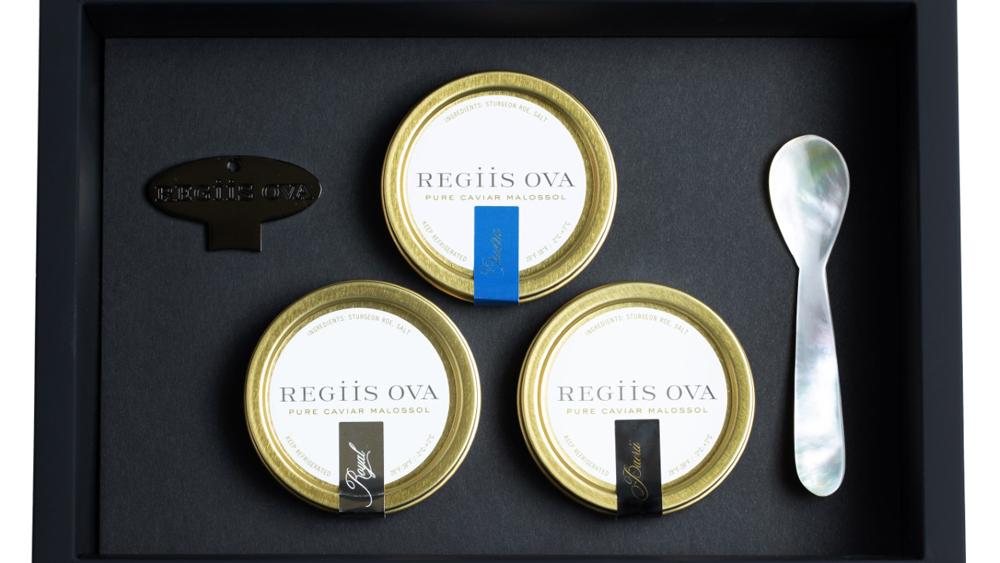 Regiis Ova, The Temptuous Trio