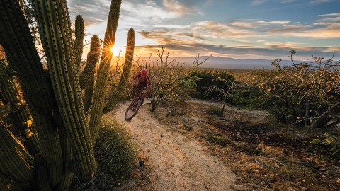 Single track at Rancho Cacachilas in Baja California weaves through cacti and thorny scrub
