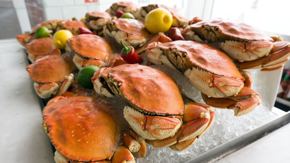 Dungeness crab on ice for sale