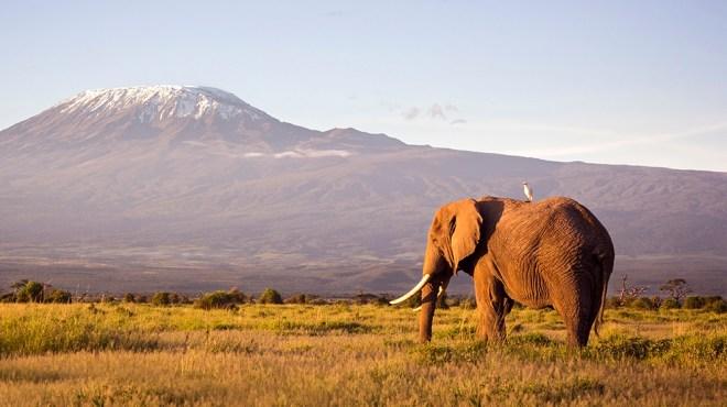 Roar Africa Safari
