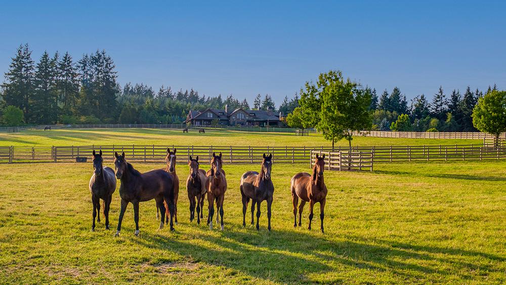 Oregon Horse Farm