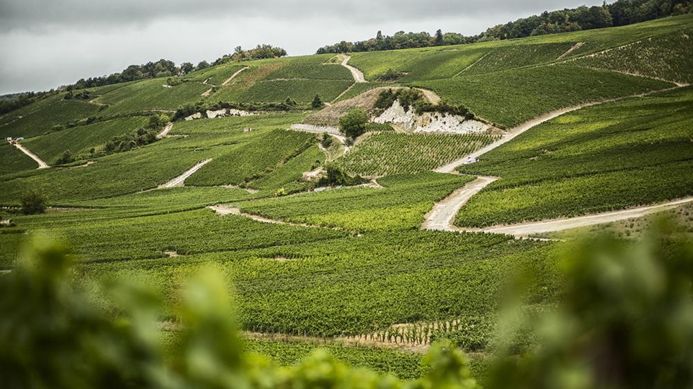 Bollinger's La Côte aux Enfants vineyard